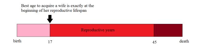 lifespan-idealised