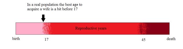 lifespan-real